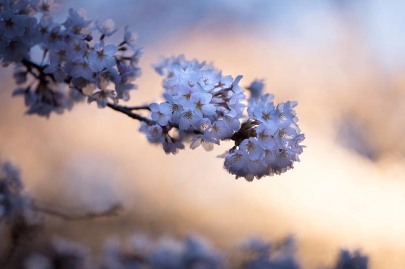 Jak se fotí jaro – naše oblíbené kvetoucí fotky